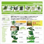観葉植物 アジアンファーム